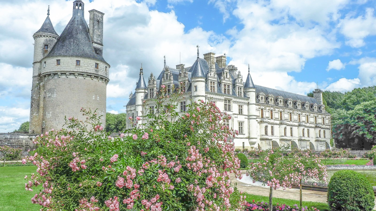 A Comprehensive Guide to Loire Valley Grape Varieties