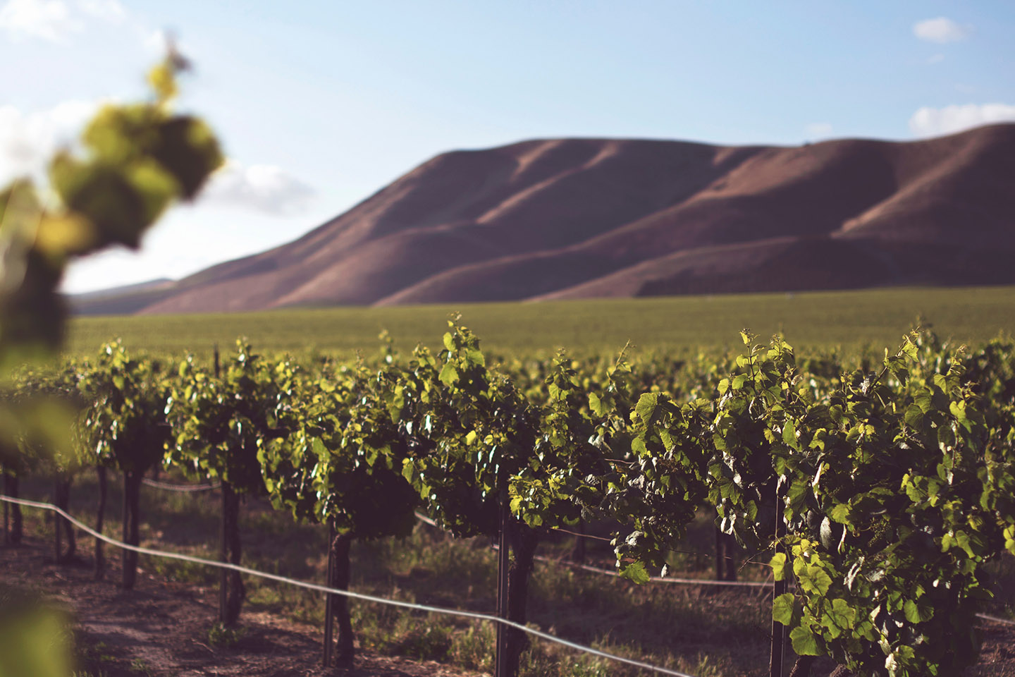 The Best Time to Be Drinking California Wine Is Now
